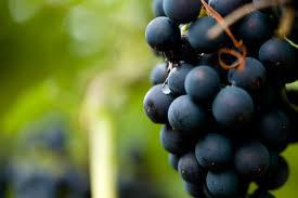 grapes1 Exciting New Blog explores Non Western Approaches to the World